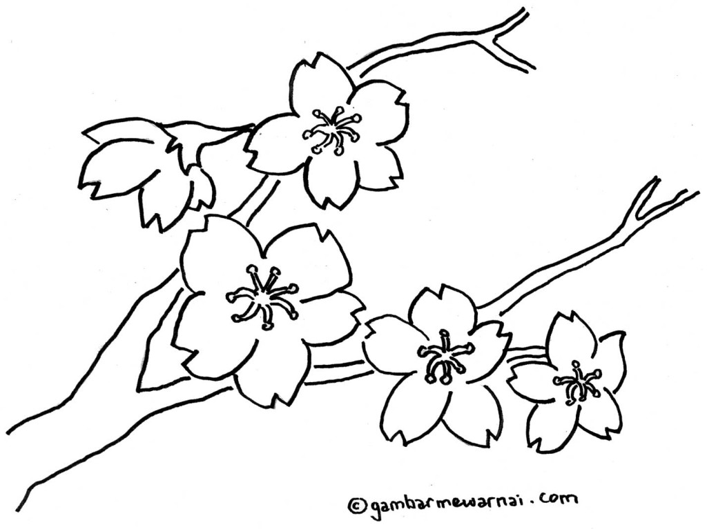 Gambar Bunga Related Keywords & Suggestions - Gambar Bunga Long Tail ...