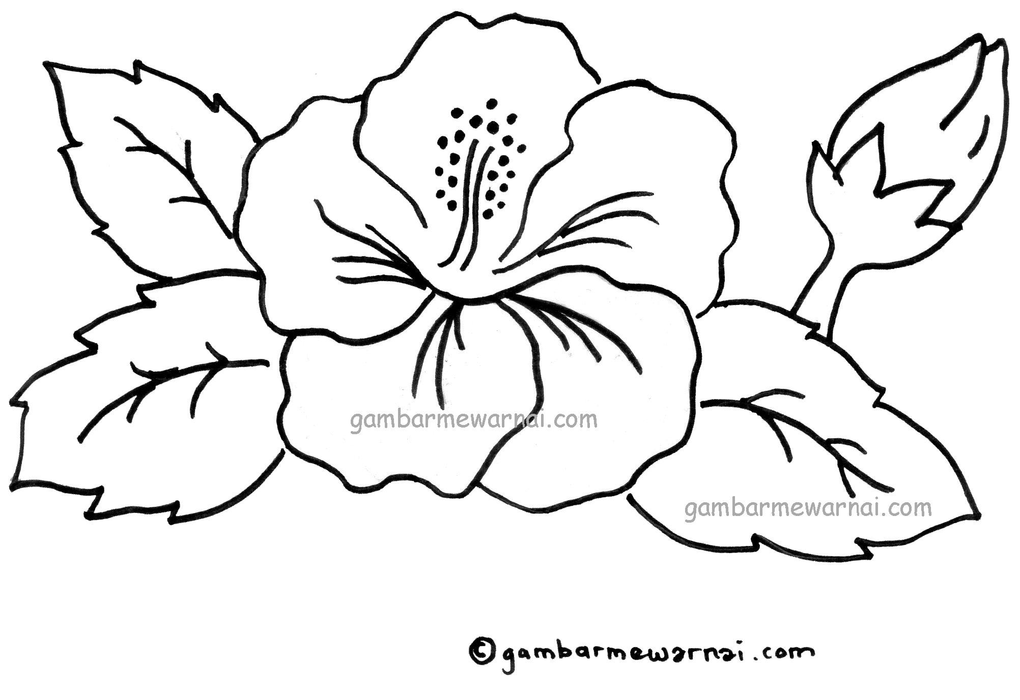 download gambar mewarnai bunga kembanga sepatu