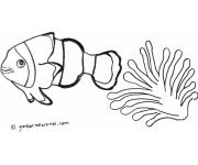 Gambar Mewarnai Ikan
